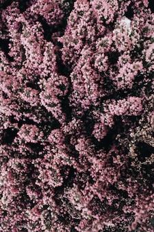 Padrão de flores roxas