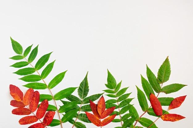 Padrão de folhas outonais verdes e vermelhas