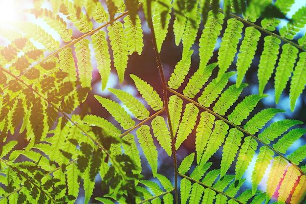 Padrão de folhas verdes na natureza com a luz do sol e flare