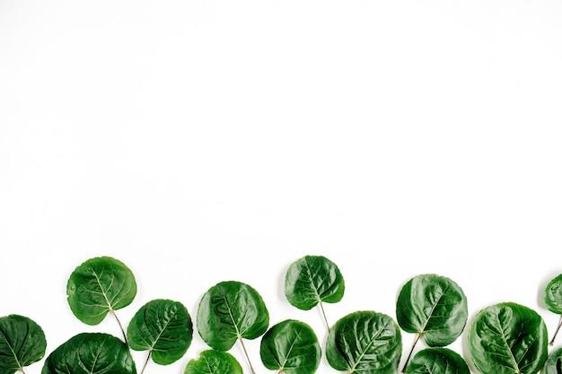 Padrão de folhas verdes na superfície branca