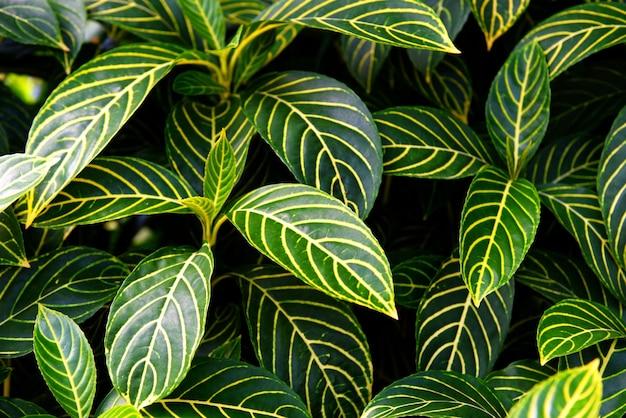 Padrão de folhas verdes naturais