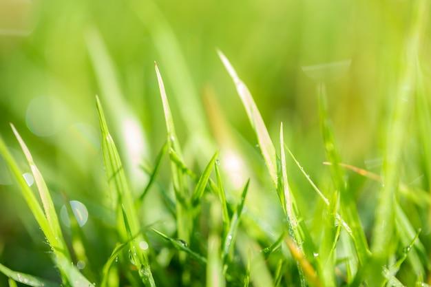 Padrão de grama, blur e bokeh