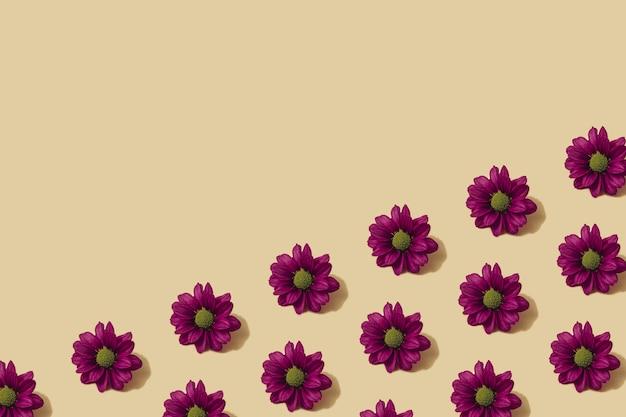 Padrão de outono na cor amarela e roxa. fundo mínimo da flor da margarida do outono. layout de outono criativo. postura plana com espaço de cópia.