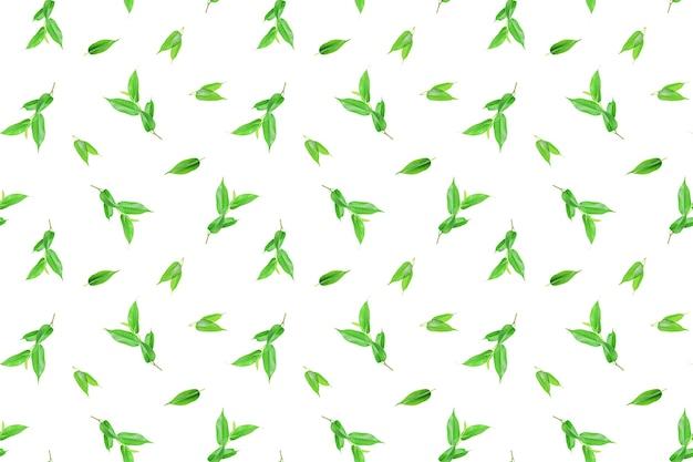 Padrão de primavera sem costura de folhas verdes