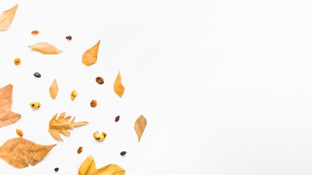 Padrão de quadro de floresta de outono