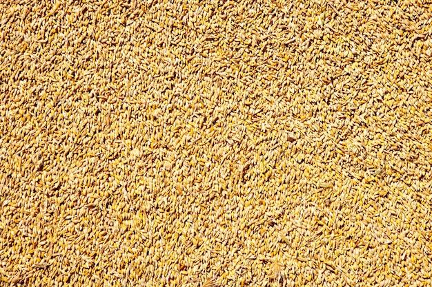 Padrão de textura de grão de trigo de cereais