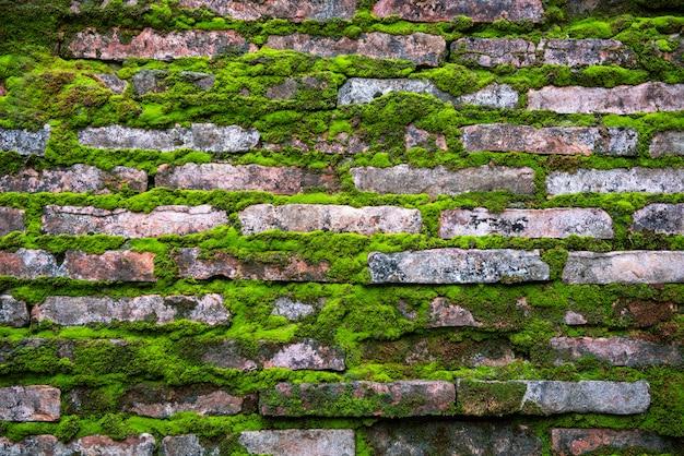 Padrão de tijolos com grama verde velha musgo rústico