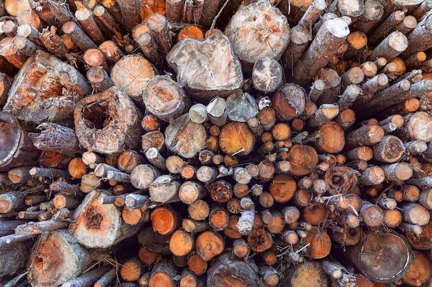 Padrão de troncos de árvore. pilha de madeira. textura de madeira.