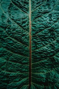 Padrão de uma planta azul closeup vista superior