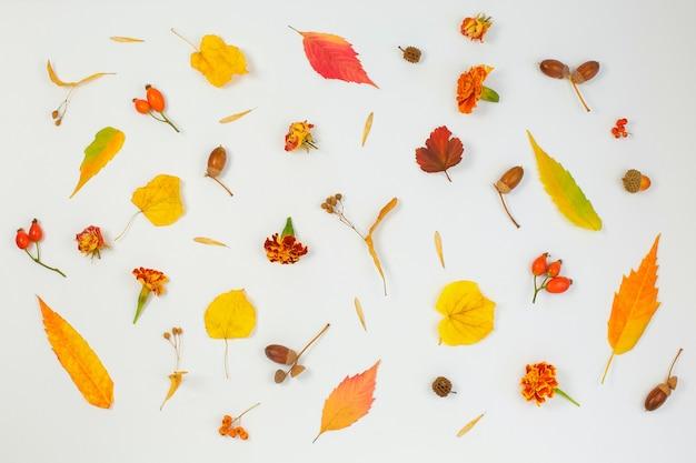 Padrão feito de bolotas de folhas secas de outono em fundo branco