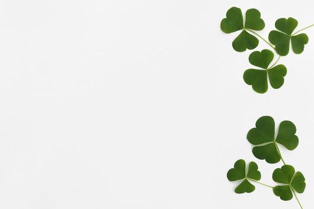 Padrão feito por folhas verdes de trevo (trevo) com lugar vazio à direita sobre fundo claro.