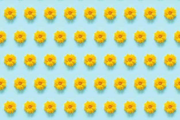 Padrão floral. flores amarelas naturais sobre fundo azul.