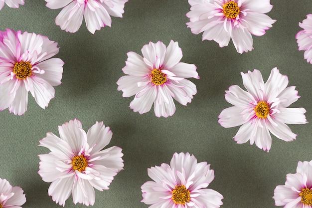 Padrão floral. flores cor de rosa naturais sobre fundo verde. modelo para o seu projeto vista superior camada plana