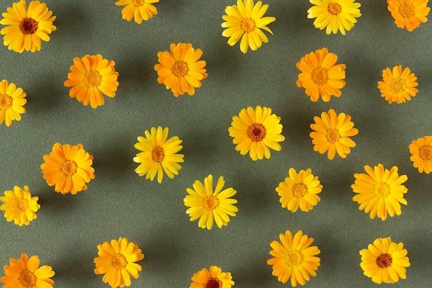 Padrão floral. flores de laranja naturais de calêndula sobre fundo verde. modelo para seu projeto vista superior camada plana.