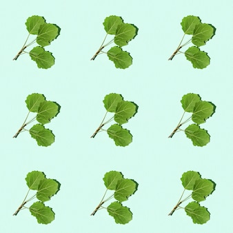 Padrão sem emenda com galho verde com folhas de álamo tremedor ramo mínimo da planta natural