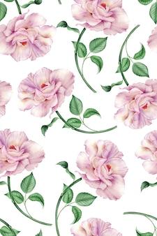 Padrão sem emenda com rosa em uma ilustração botânica em aquarela de fundo branco