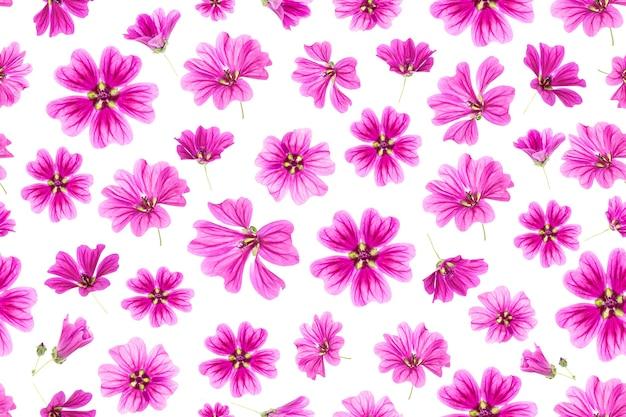 Padrão sem emenda de flores cor de rosa em um fundo branco, como pano de fundo ou textura. primavera, papel de parede de verão para seu projeto. vista superior flat lay.