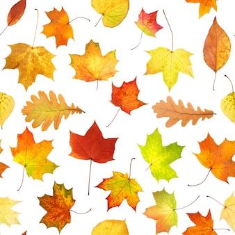 Padrão sem emenda de folhas coloridas de outono isoladas no fundo branco