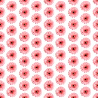 Padrão sem emenda de gerbera rosa em uma foto germini branca convertida em um padrão uniforme