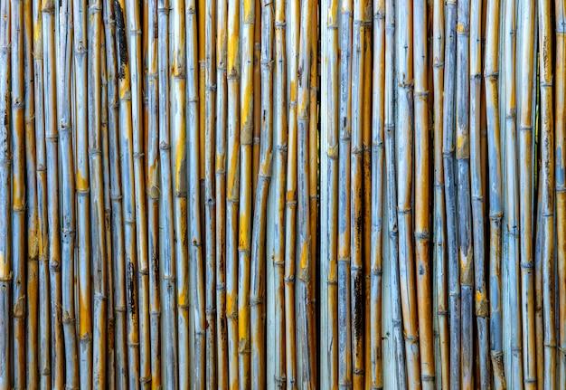 Padrões de backgronuds de textura de bambu amarelo velho de tailândia