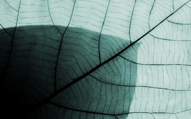 Padrões de folha