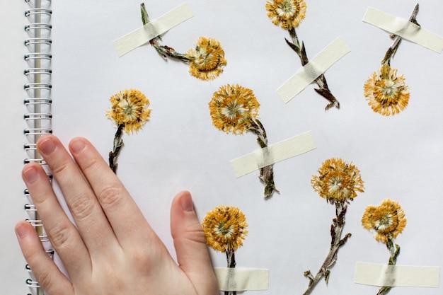 Página de herbário com flores secas amarelas.