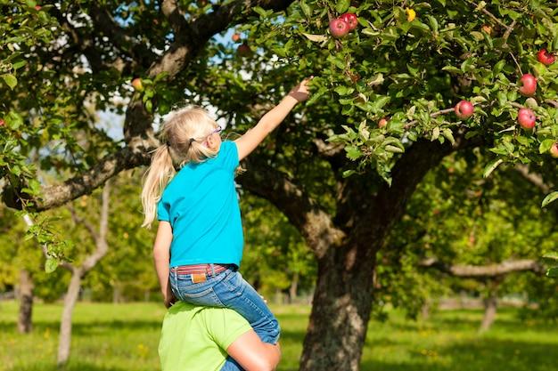 Pai e filha colhendo maçãs