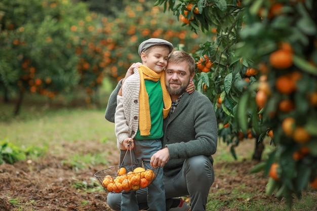 Pai e filho colhem tangerinas da horta