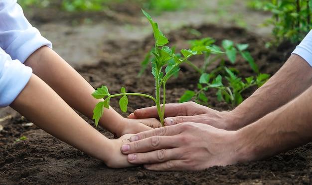 Pai e filho estão plantando uma planta no jardim