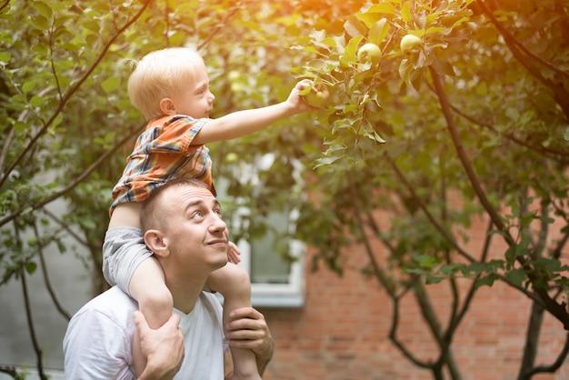 Pai e filho pequeno colhendo maçãs.