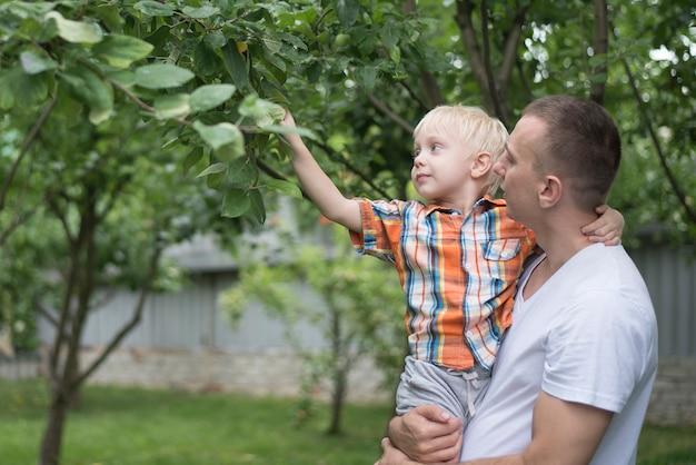 Pai e filho pequeno estão colhendo maçãs. jardim ao fundo