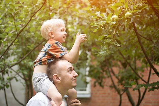 Pai e filho pequeno estão colhendo maçãs