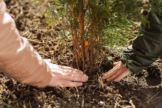 Pai e filho plantando uma árvore juntos ao ar livre
