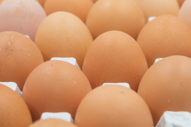 Painel de ovo. frango de ovo em fundo branco