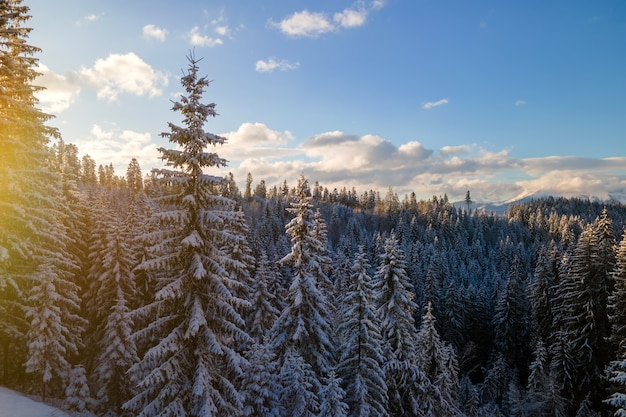 Paisagem aérea do inverno com árvores spruse da floresta coberta de neve nas montanhas frias à noite.