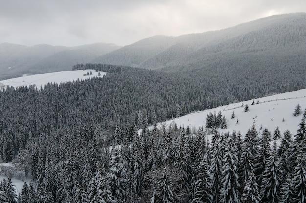 Paisagem aérea nebulosa com pinheiros verdes cobertos com neve fresca caída após uma forte nevasca na floresta de montanha de inverno na noite fria e tranquila.