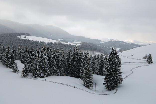 Paisagem aérea nebulosa com pinheiros verdes cobertos com neve fresca caída após uma forte queda de neve na floresta de montanha de inverno na noite fria e tranquila.