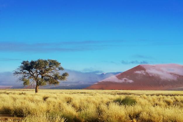 Paisagem africana, belas dunas do sol e natureza do deserto do namibe, sossusvlei, namíbia, áfrica do sul