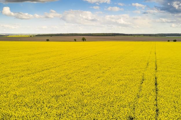 Paisagem agrícola de um campo de colza com linhas e céu azul