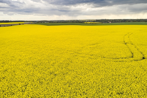 Paisagem agrícola de um campo de colza com linhas e nuvens pesadas antes da chuva