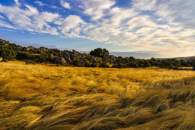 Paisagem ao nascer do sol com campos de ervas douradas e céu nublado.
