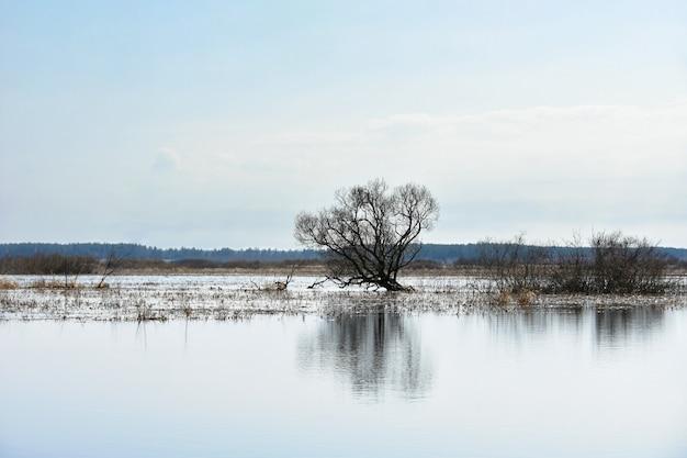 Paisagem árvore cresce em um campo com água de um rio