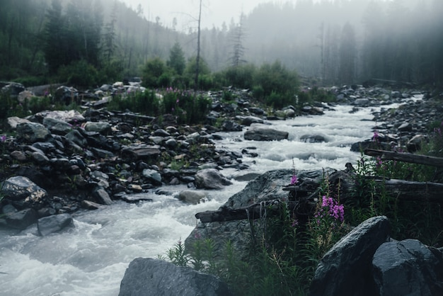 Paisagem atmosférica chuvosa com flores cor de rosa no fundo do poderoso rio da montanha sob chuva forte
