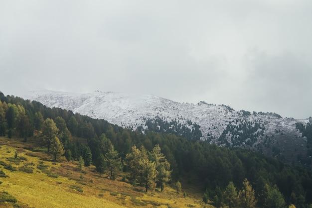 Paisagem atmosférica com floresta de outono com larício amarelo na encosta da montanha na luz do sol dourada no fundo da alta montanha coberta de neve em nuvens baixas. bela montanha de neve sob nuvens de chuva.