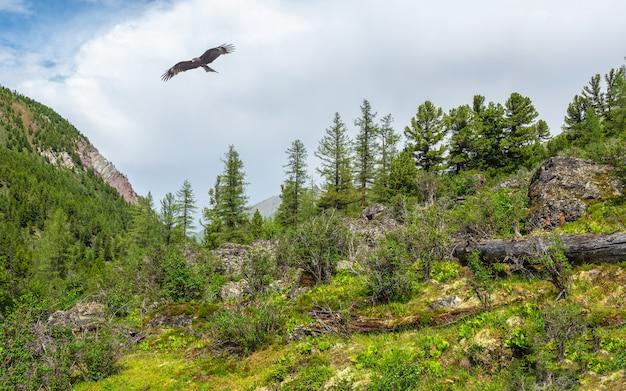 Paisagem atmosférica da floresta verde com abetos nas montanhas. cenário minimalista com floresta de coníferas de borda na névoa leve e águia voadora. paisagem alpina tranquila no início da manhã.