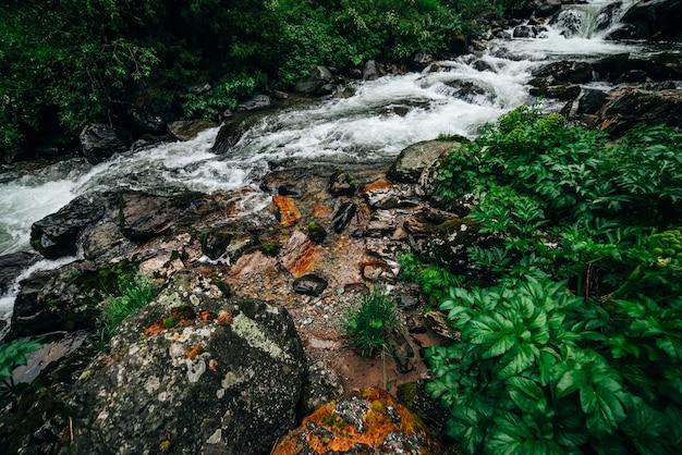 Paisagem atmosférica de floresta verde com riacho de montanha