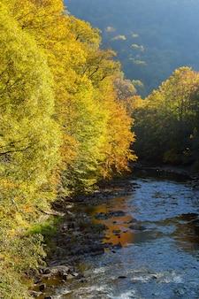 Paisagem bonita da floresta do outono perto do lago e da reflexão idílico das árvores.
