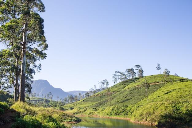 Paisagem bonita de sri lanka. rio, montanhas e plantações de chá
