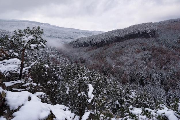 Paisagem bonita do inverno com árvores cobertas de neve.