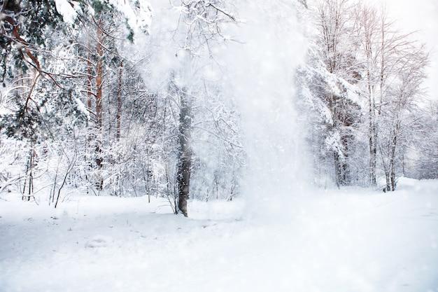 Paisagem bonita do inverno com árvores cobertos de neve. feliz ano novo. feliz natal